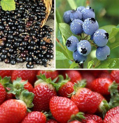 Slabeste cu fructe si legume calorii negative